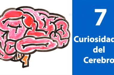 7 datos curiosos tal vez no conocías del cerebro