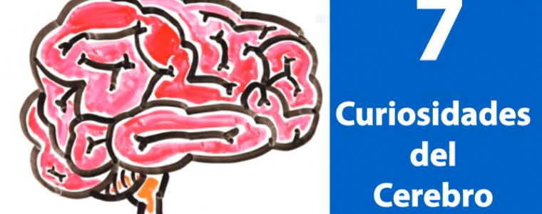 7-Curiosidades-del-Cerebro