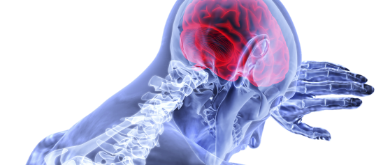 ¿Cómo funcionan las emociones? el cerebro y su relación con ellas